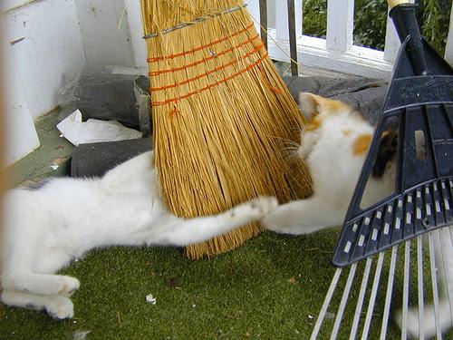 broomfight