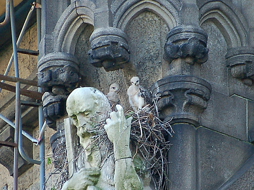 Cathedral Red-Tail Babies