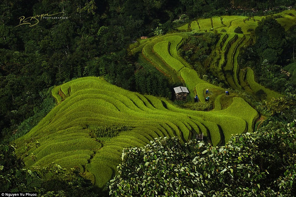 Vibrant Vietnam: Amidst the rolling green landscape, Nguyen Vu Phuoc shoots the Nung Lady Rice Farmers in Hoang Su Phi