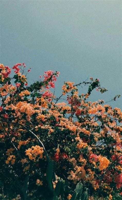 riiteyaet wanderluster aesthetic backgrounds flower wallpaper