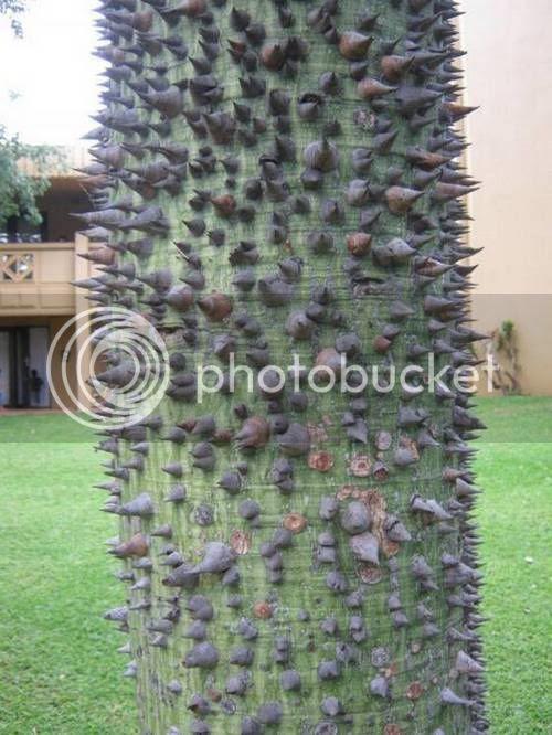 pokok pelik 9 [Gambar Pelik] Koleksi Gambar Pokok Pelik