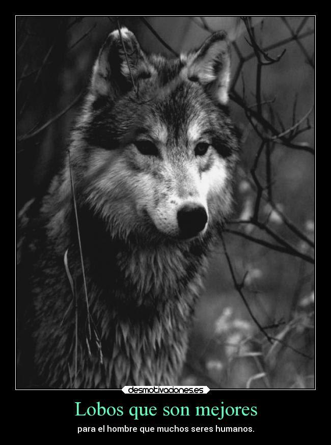 Fondos De Lobos Para Celular Fondos De Pantalla