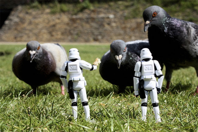 Stormtroopers recruiting pigeons