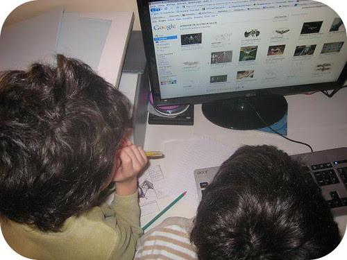photos site lapbook Chauve souris2