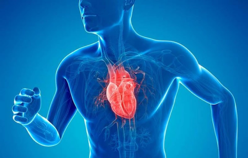 What You Can Do to Prevent a Heart Attack