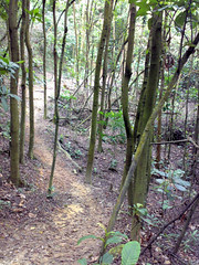 Kent Ridge Park Mountain Bike Trail