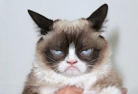 Kucing Lucu Nangis