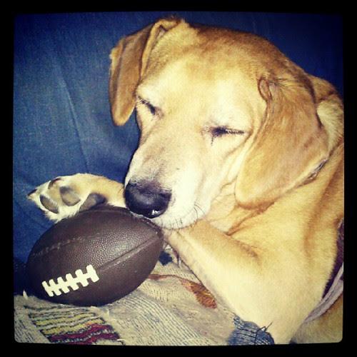 Sophie, wishing for a #patriots win today!  #pats #patsnation @patriots #dogstagram #dogsofinstagram #instadog #petstagram