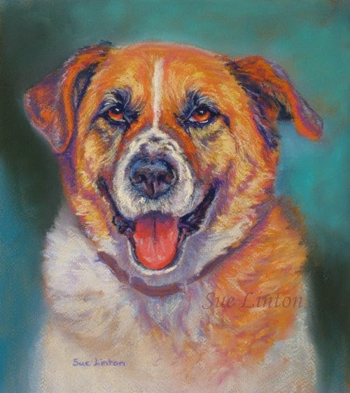 A pet portriat painting of a St Bernard Cross Dog