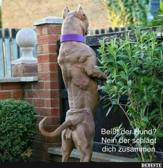 Beißt Der Hund Nein Der Schlägt Dich Zusammen Lustige Bilder
