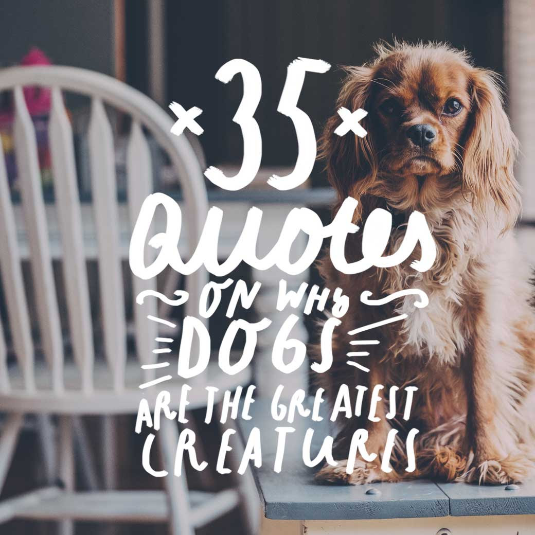 35 Quotes On Why Dogs Are The Greatest Creatures On Earth Bright Drops
