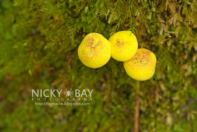 Fungi - DSC_2384