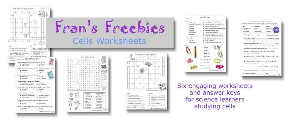 The Virtual Cell Worksheet Answers