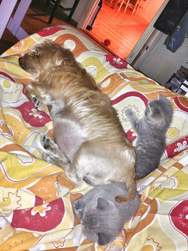 little loaf and two blue tykes