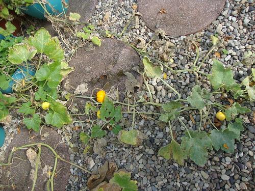 the 4 little pumpkins
