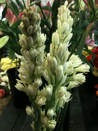 Tuberose in the Flower Shop