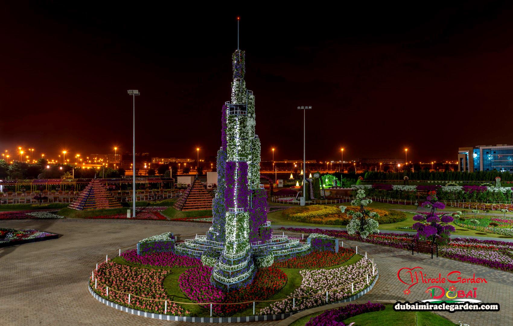 Dubai Miracle Garden 09