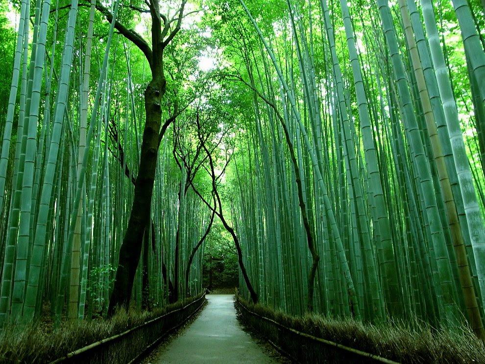 Знаменита бамбуковий гай в Японії