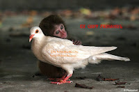 monkey dove