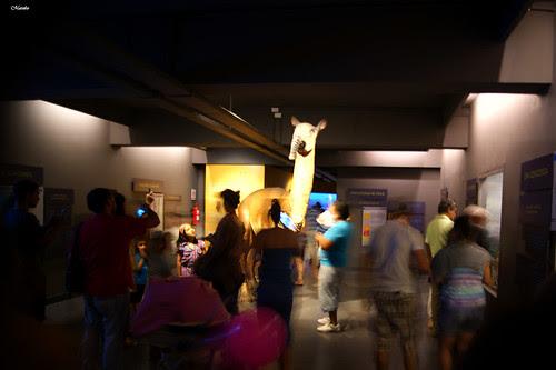 Museo de Historia Natural. by Alejandro Bonilla