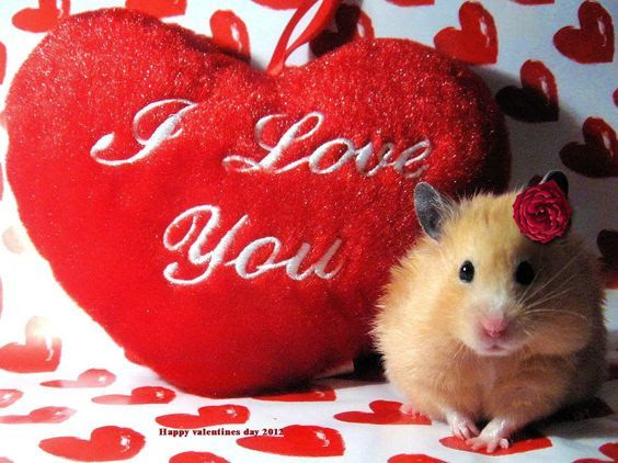 Cute Valentines I Love You Quote Pictures Photos And Images For