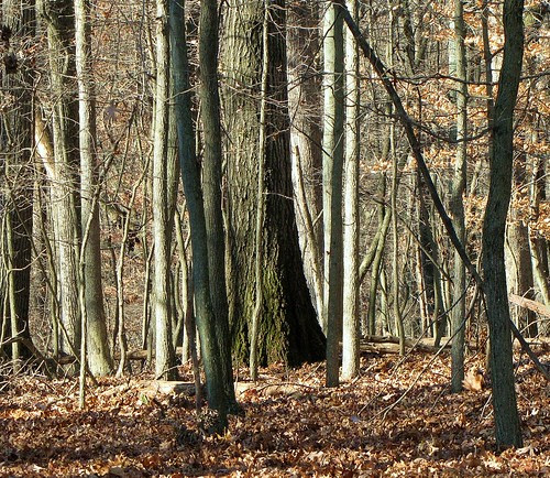 A view in the woods by CharlesRay2010