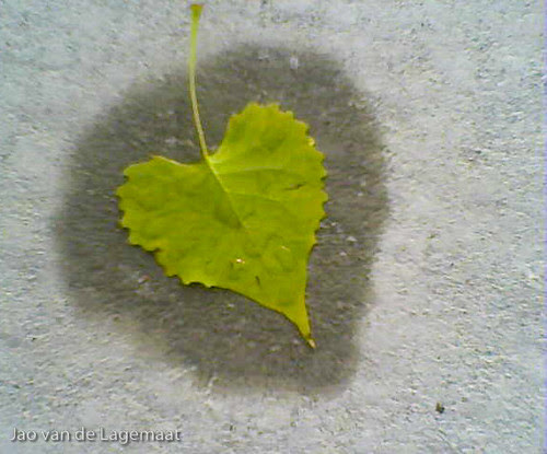 Sidewalk leaf : cellphone picture