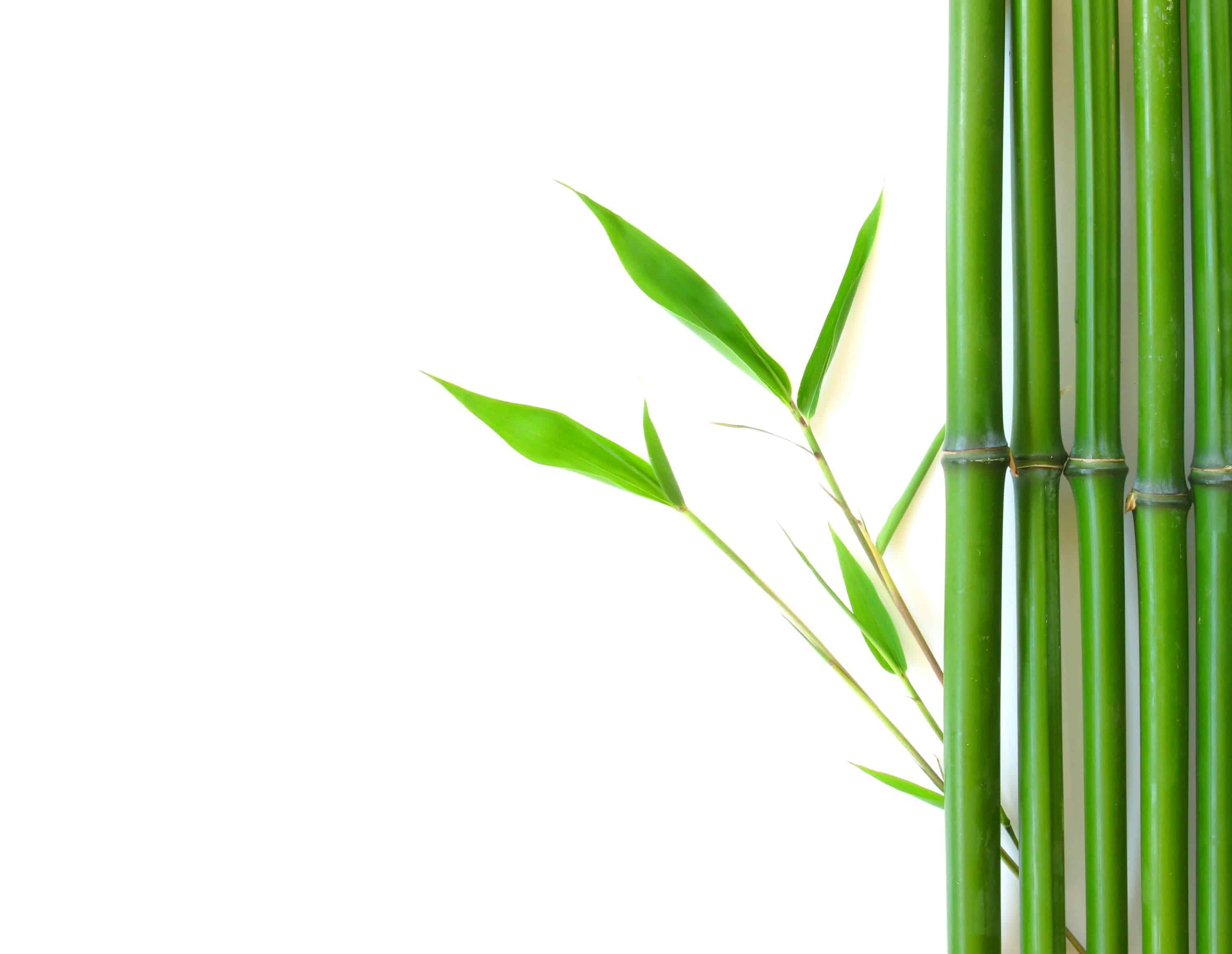 bamboo with roots clipart 1