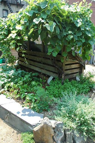 Compost Bin Grape Arbor