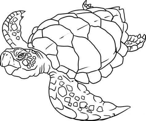 sea animal coloring apges coloring pages