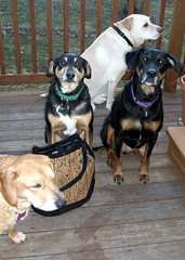4Dogs_TBihnBag_31710c