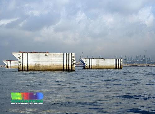 Reclamation at Pasir Panjang container terminal