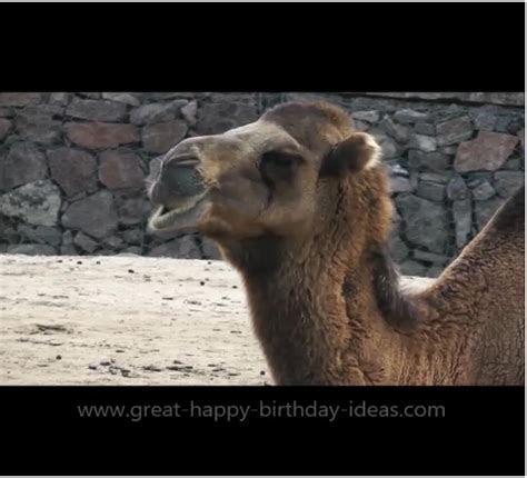 Happy Birthday Camel Card. Free Specials eCards, Greeting