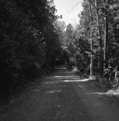 Backroad in Belfountain