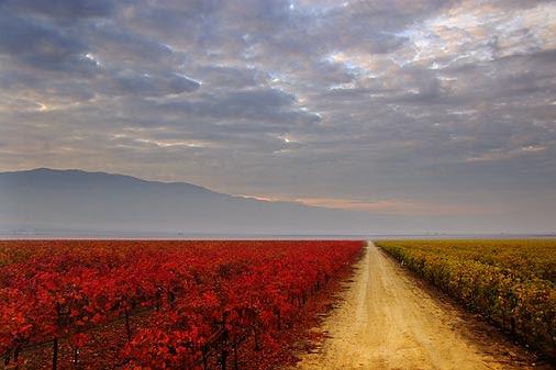 San Joaquin colors