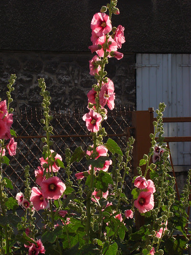 Flowers in the evening sun (3)