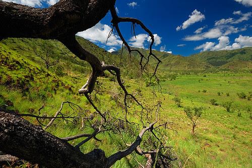 Nagsasa Wilderness