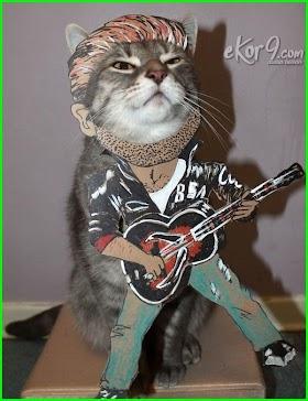 Kucing Lucu Pake Baju