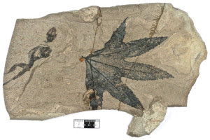 The Lizard Fossil