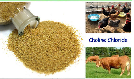 Choline Chloride - Manufacturers, Suppliers & Exporters in India