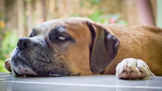 Meditación con mascotas: una nueva práctica de moda