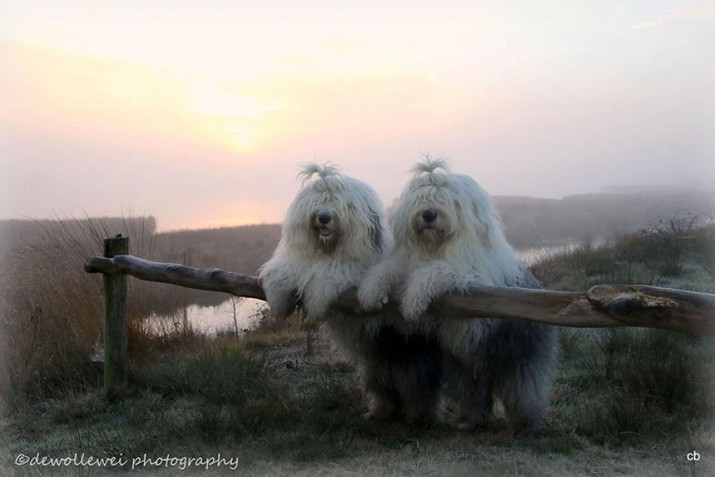 Estas fotogênicas irmãs bobtail fazem pose até para relâmpagos 07