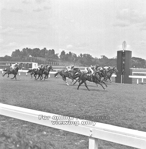 Closeup of horse racing. Image taken from Singapore Press Holdings, 1983.