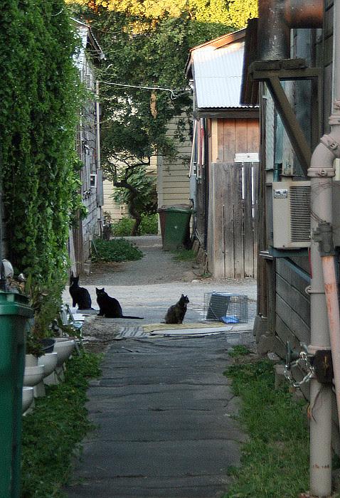 Locke Cats