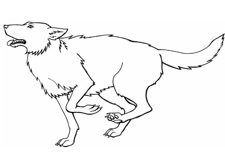 wolf ausmalbilder zum ausdrucken  ausmalbild wolf im zoo