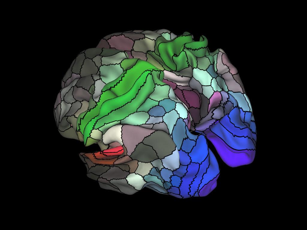 Neurocientistas criam mapa com 97 novas áreas do Cérebro