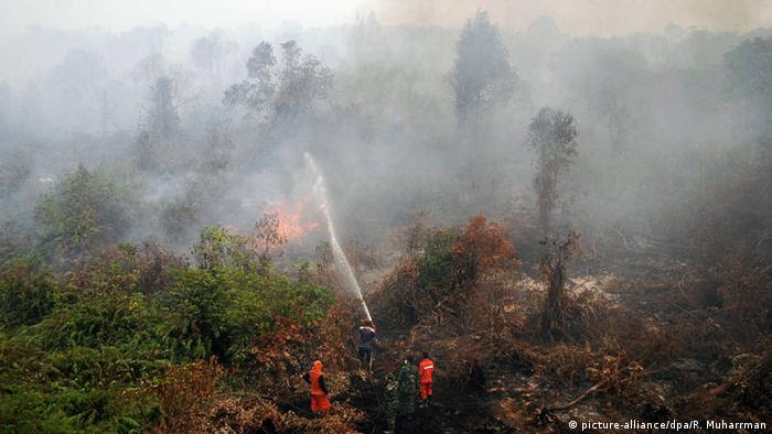 Indonesien Rimbo Panjan Waldbrände (picture-alliance/dpa/R. Muharrman)
