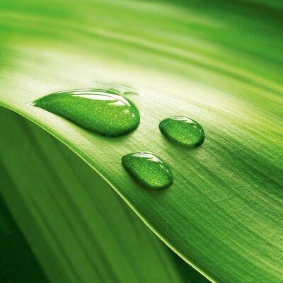 Green Modern Decor | Wayfair