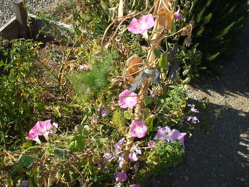 Point Reyes Station community garden