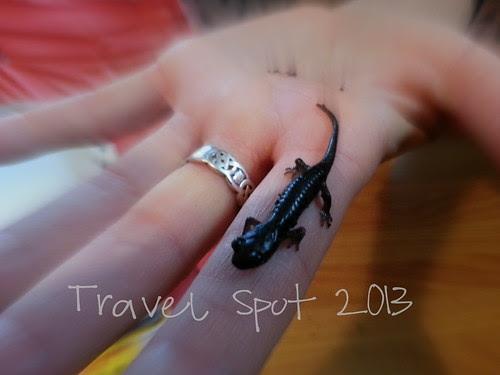Garden Salamander